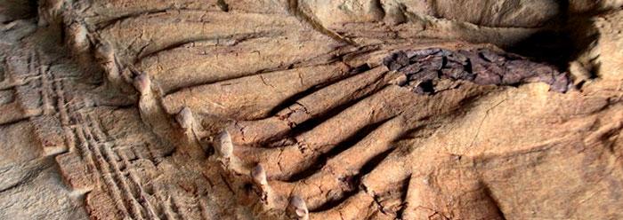 Leonardo, dinozaurul mumificat, confirmă teoria creaționistă
