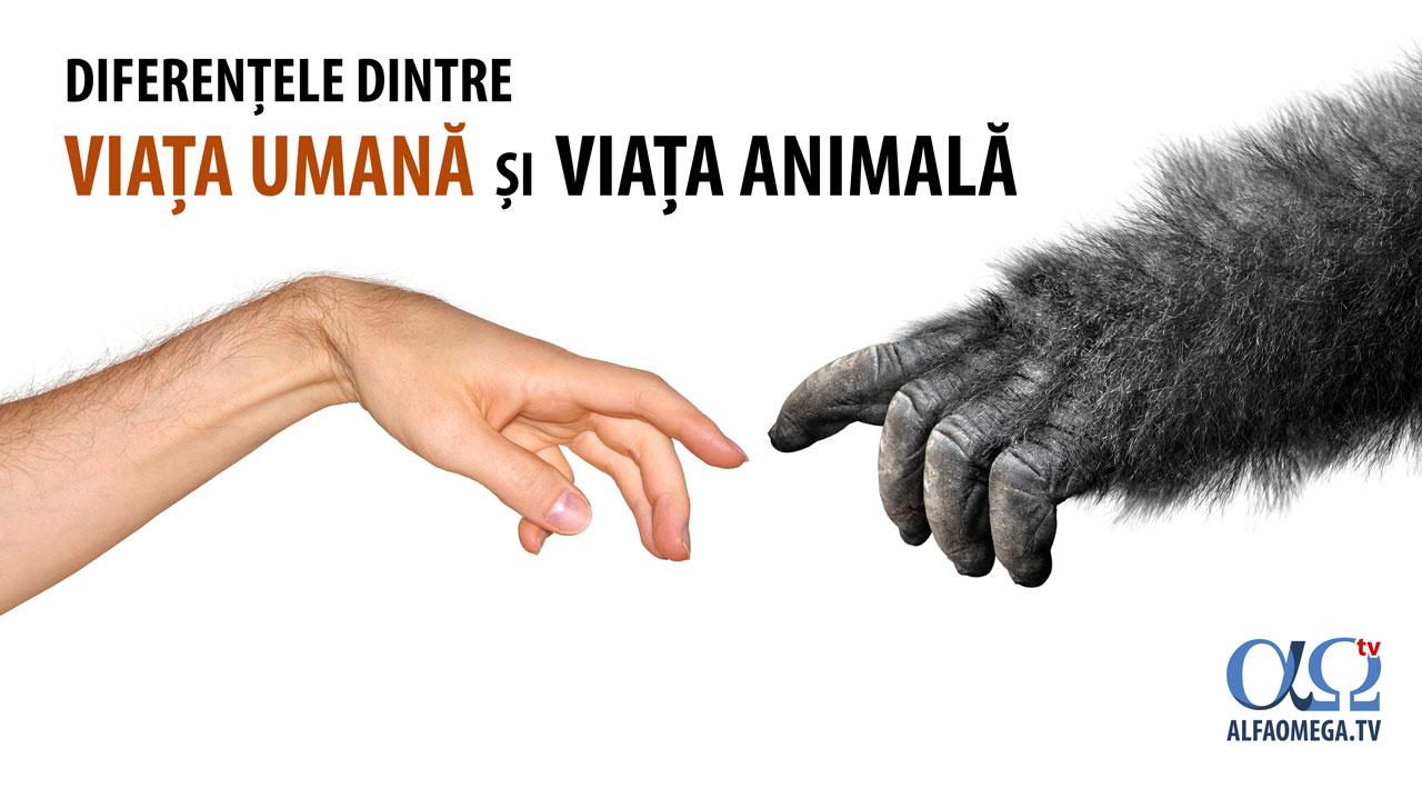 Diferențele dintre viața umană și viața animală – creaționism vs. evoluționism
