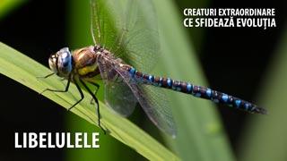 Libelulele - Creaturi extraordinare care sfideaza evoluția