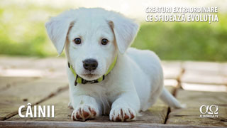 Câinii - Creaturi extraordinare care sfideaza evoluția