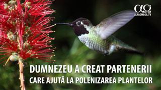 Dumnezeu a creat partenerii care ajută la polenizarea plantelor