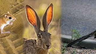 Șoareci, iepuri, cuci alergători: Așezați pentru a umple